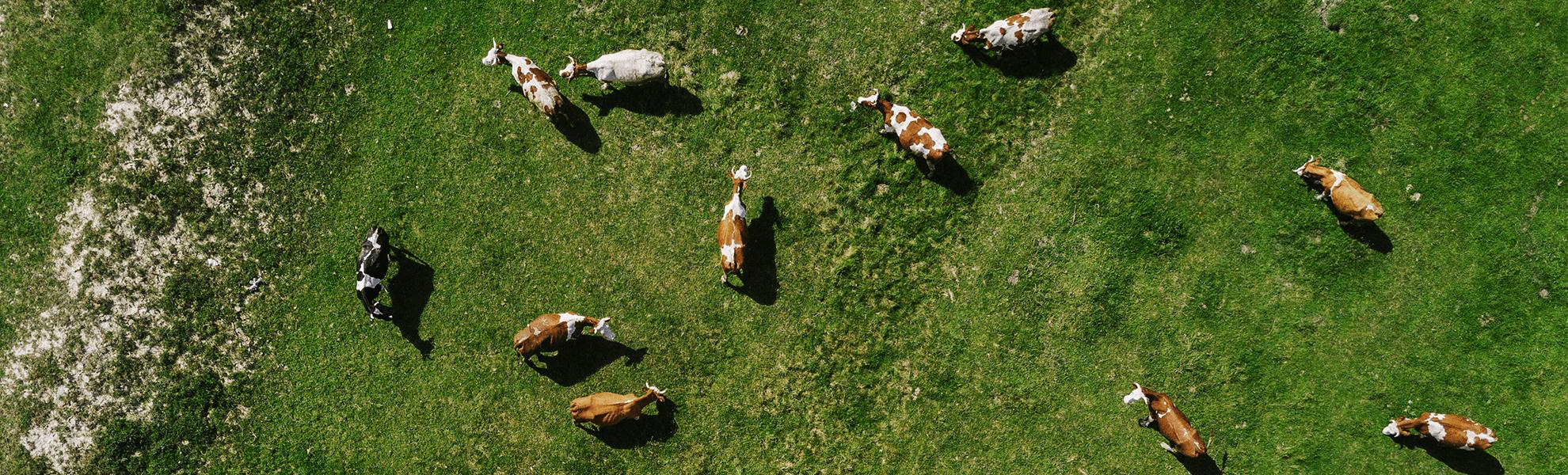 Prekyba gyvūlininkystės įranga